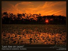 Last-Light-at-Loxahatchee-Slough-Wetlands (Captain Kimo) Tags: sunset lake pond florida wetlands lilypads highdynamicrange photomatixpro tonemapping hdrphotography loxahatcheeslough