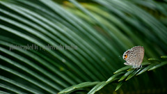 just... (Syahrel Azha Hashim) Tags: detail green butterfly nikon colorful dof bokeh malaysia handheld shallow 200mm greenbackground 55200mm d300s syahrel