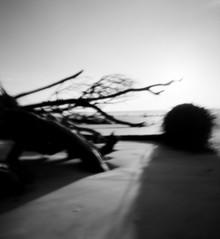 The Art of Seeing (VLBPhotography) Tags: usa beach mediumformat square southcarolina pinhole erosion deadtrees huntingisland hiltonheadisland filmphotography kodakportra beacherosion zeroimage612b summerphotographyworkshop valerieloiretbrunissen vlbphotographycom