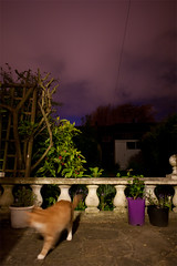 Seventy Nine / Year Two. (evilibby) Tags: longexposure sky night cat garden outside outdoors evening hemma gingercat project365 barnabee