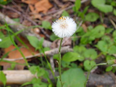 P5063748 (Raccoon Photo) Tags: flowers trees friends ohio wild summer lake cute green nature animals creek river walking fun spring furry squirrel squirrels friend funny stream hiking walk nuts may handsome peanuts hike deer friendly peanut wildanimal parma nut reservation walkinginnature metropark metroparks wildsquirrel parmaohio bigcreekparkway hikinginnature stateroadpark