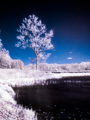 Beckman Tree Infrared (Painted Light Studio (hardpan photo)) Tags: statepark trees sky tree water grass wisconsin ir shore infrared colorinfrared r72 hoyar72 browntown falsecolorinfrared beckmanlake cadizsprings