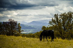 (PZ Photography) Tags: cheval suisse nuage animaux campagne berne champ