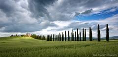 Cypress Tree Road (Panorama Paul) Tags: italy tuscany valdorcia nikkorlenses nikfilters nikond800 wwwpaulbruinscoza agriturismopoggiocovili paulbruinsphotography
