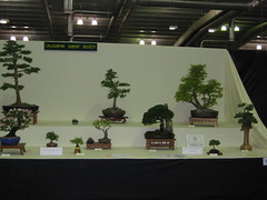 CBS display (Bonsaigirl) Tags: scotland display gardening bonsai caledonian 2013