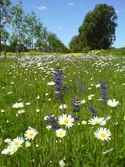 the flowers smile :) (terraincognita96) Tags: germany nordrheinwestfalen northrhinewestphalia
