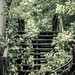 stairway to the jungle