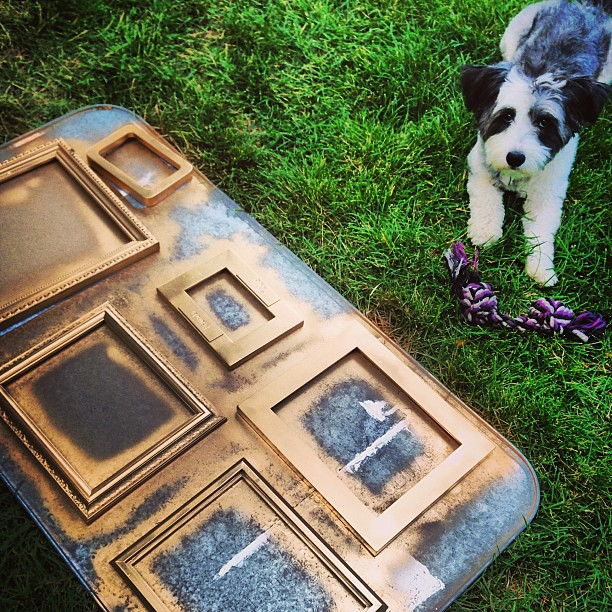 Painting frames in the hot hot heat with my furry friend!!! #scout #pooch #painting