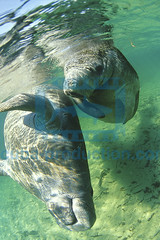2013 06 ESK FLORIDE CRISTAL RIVER 0020