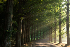 Shower of light (SYU*2) Tags: morning light summer sun mountain color tree green love nature colors beautiful japan sunrise landscape shower photography nikon scenery d800 2470mm 2470 nikoor
