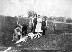 Schoolgirls with Gloucester Old Spots (BasiliskSam) Tags: woman farm pigs schoolgirls piglets gymslips gloucesteroldspotpigs