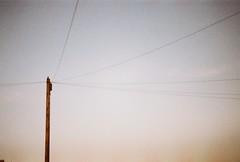 Telegraph (Leon Puplett) Tags: sunset bird film me 35mm gold pentax kodak dusk telephone super line pole analogue telegraph blackbird