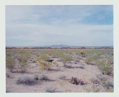 mojave desert by Missy Prince -