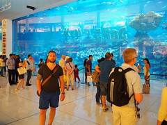 Worlds biggest fishtank, Dubai Mall.