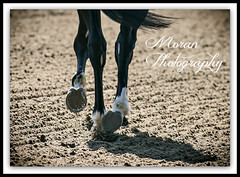 Mubtaahij-No Rear Traction (EASY GOER) Tags: horses horse ny newyork sports race canon track mark iii running racing 5d athletes races thoroughbred equine thoroughbreds belmontpark markiii equines