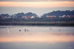 waterfowl in the morning (Frednik) Tags: maasduinen niederlande nikon 70200mmf28 fx see