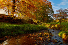 October's Song (scottprice16) Tags: england lancashire autumn river refelctions colour trees deciduous leaves october mellow mood still morning clitheroe canong1xmarkii
