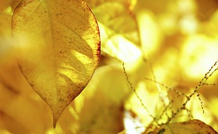 Autumn Backlit