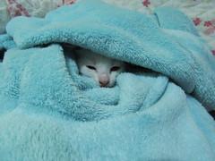 fsdfsdf (Azura / Nana) Tags: gatinho filhote kitten cat heterocromia blueeye greeneye gato gatobranco