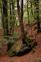 DSC_0027 (jrzurutuza) Tags: renteria listorreta urdaburu aldura aia aya harria peas ruta carboneros