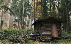 Cabin in the Woods (desomnis) Tags: woods woodland forest cabin nature naturephotography mühlviertel oberösterreich upperaustria austria österreich trees autumn autumncolors canon6d sigma35mm sigma35mmf14dghsmart desomnis 6d bohemianforest böhmerwald landscape landscapephotography landschaft landscapes