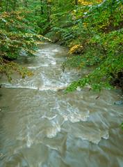 Green (daddymaverick91) Tags: stream greenery lush flow steady rip cap wave trees light hopeful
