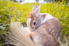 IMG_1738.jpg (ina070) Tags: animals canon6d cute grass outdoor outside pets rabbit rabbits