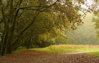 Amaneciendo en el bosque (explore)