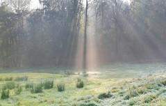 die Sonne kmpft sich durch... (wolfi-rabe) Tags: nebel nebelstimmung waldrand