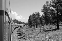 Trip to Grand Canyon (Pix.by.PegiSue>Thx over 4M+ views! Click on Albums) Tags: pixbypegisue canon arizona grandcanyon mountain nature ngc parks nationalparks public protect roadtrip tourist touristspot natureza travel