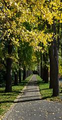 Lonely Path (Barney A Bishop) Tags: newyork unitedstates brooklyn nyc newyorkcity brooklynbotanicgarden botanicgardens trees grass fall shadows leaves park nycparks landscape cityscape noflash naturallight