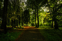Early morning meeting place (Costigano) Tags: path camhino forest woods woodland donadea kildare ireland irish canon eos autumn