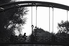 bridge (Berkan Byktmbk) Tags: street streetphotography streetphoto streetphotobw fujifilm xt1 bw blackandwhite monochrome bridge bycle sky tree outdoor woman lamb human