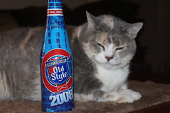 No, I did not force Normandy to drink an eight year old bottle of beer from Chicago (Hazboy) Tags: hazboy hazboy1 cubs world series norm normandy cat pussycat evil old style bud light chat katze gato gatto