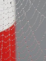 w.e.b. (Mattijsje) Tags: web www drops mist spider codweb cod beam slagboom red white wet