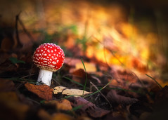 (Verlgof) Tags: mushroom macro helios fujifilm autumn bokeh nature dreams