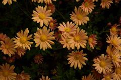 JJN_3078 (James J. Novotny) Tags: chicago conservatory botanical gardens garden flowers flower nikon d750 path paths skokie lagoons