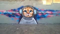 Dnyallardan tiksiniyorum (kartalisa) Tags: istanbul karaky underpass graffiti cat from world im ticklish nofilter