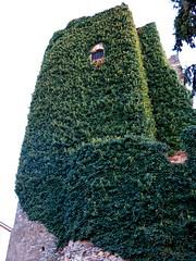 (ManuelAngel78) Tags: ponferrada elbierzo lon castillaylen espaa spain castillodeponferrada castillo castle temple templarios ventana windows verde green