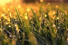 kindness (joy.jordan) Tags: grass field dew sunrise light texture bokeh autumn organic pattern