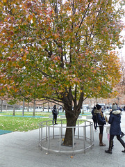 The Survivors Tree 9-11 Memorial Pools (footprints of original two towers) New York November 2016 (357) (Richie Wisbey) Tags: 911 september 2001 two twin towers world trade center centre ground zero memorial tribute survivor tree downtown new york city usa nine eleven richard richie wisbey november 2016