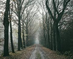 Into the darkness - Ter Apel (Martijn van Sabben) Tags: forest woodland wood woods tree trees nature naturephotography lines perspective lightroom ngc holland nederland zoomzoomnl defotoblogger natuur groningen westerwolde vlagtwedde netherlands natureandnothingelse followme follow
