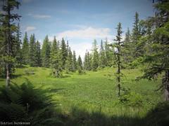 This must be heaven (katrienberckmoes) Tags: rauris valley hochalm mountain summertime heavenly pure nature alp feeling pine tree landscape austria