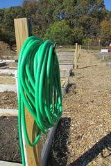 IMG_0958 (hammonton_garden) Tags: 2016 communitygarden fall hammonton southjersey nj gardenstate