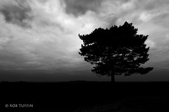 Angry Skies Cast A Shadow (REWT Photography) Tags: sky skies bw blackwhite newforest hampshire tree nature landscape clouds shadow silhouette canon mono scene moody dark nationalpark uk scenic cloud dusk outdoor