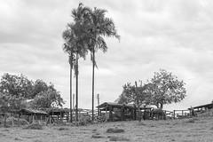 Paisagem - Goias (Andre Zuin) Tags: cerrado goias bw monochrome landscapes paisagens arvores trees brasil brazil travel viagem blackwhite