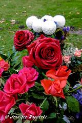 Trnennasse Rosen (Bernsteindrache7) Tags: autumn color flora fauna flower garden bloom blossom blume outdoor park landscape panasonic lumix rose