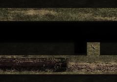 Essentials? 3 -- Grass - Soil - Kiebitz ~ Vanellus vanellus ~ Peewit - rusty drinking trough for cows - An Easter Paseo at Lange Lacke, UNESCO World Heritage Site Neusiedlersee (hedbavny) Tags: bird collage easter season austria österreich nationalpark spring rust walk decay jahreszeit wiese rusty aves unescoworldheritagesite unesco paseo naturereserve essential gras ausflug rost vanellusvanellus rostig vogel burgenland essentials frühling spaziergang vanitas ausschnitt erde neusiedlersee vergänglichkeit wichtig verfall unescowelterbe peewit osterspaziergang naturschutz charadriidae seewinkel langelacke zugvogel unwichtig österreichaustria kiebitz kuhtränke regenpfeifer vogelschutz vogelparadies essenz standvogel nationalparkneusiedlersee nationalparkneusiedlerseeseewinkel strichvogel gaukeln bodenbrüter