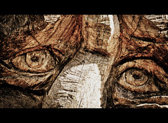 Eyes are the mirror of the soul (PeterJ) Tags: wood holland tree eye nature dutch forest eyes utrecht walk carving textures area zuiko lr woodcarving 2012 lightroom leersum m43 mft staatsbosbeheer stateforest leersumseveld epl1 45mm18 frompeterj 112picturesin2012 112picturesin201297eyes