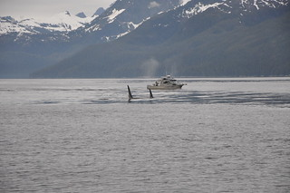 Alaska Fishing Lodge - Sitka 30
